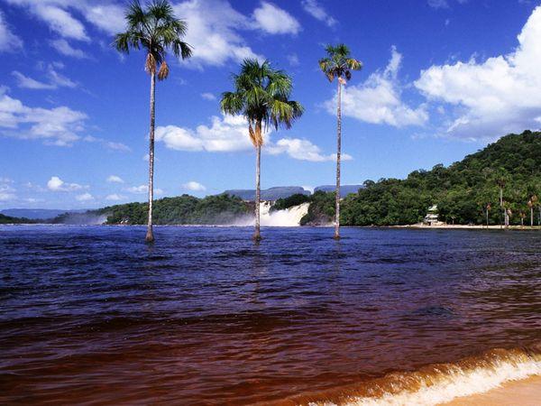 пляж 3 пальмы